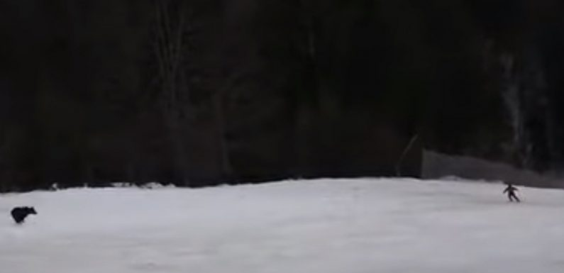 A Skier in Romania Was Chased Down the Slopes by a Bear — and the Scary Encounter Was Caught on Video