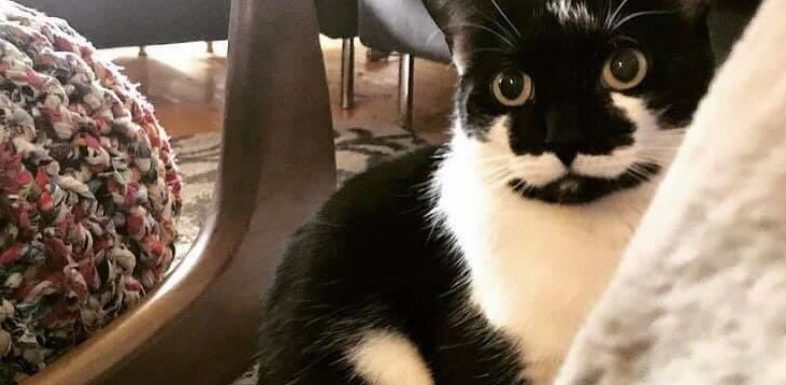 Cat found at airport 11 days after going missing