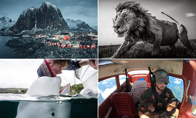 Images from shortlisted pros in the 2021 Sony World Photography Awards