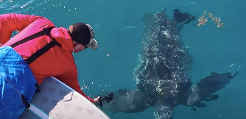 Florida Fisherman Hopes Footage ofLeatherbackSea Turtle Feeding Amongst Plastic Sparks Change