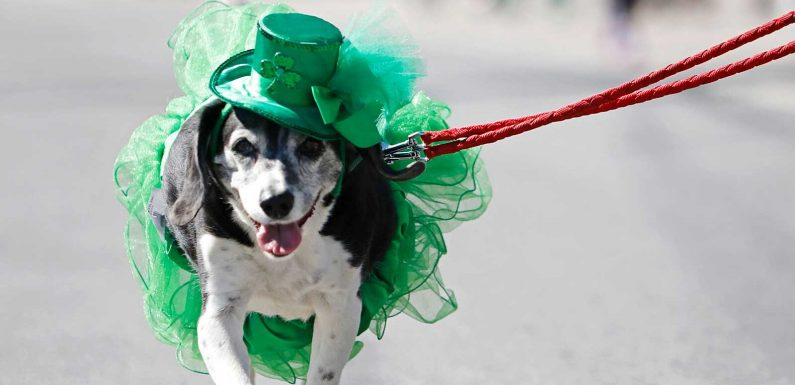The 55 Best Instagram Captions to Celebrate St. Patrick's Day