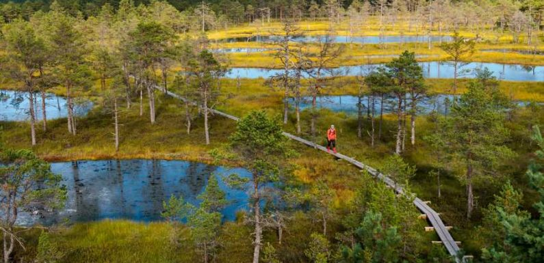 This Epic New Hiking Trail Connects National Forests in Estonia, Latvia, and Lithuania