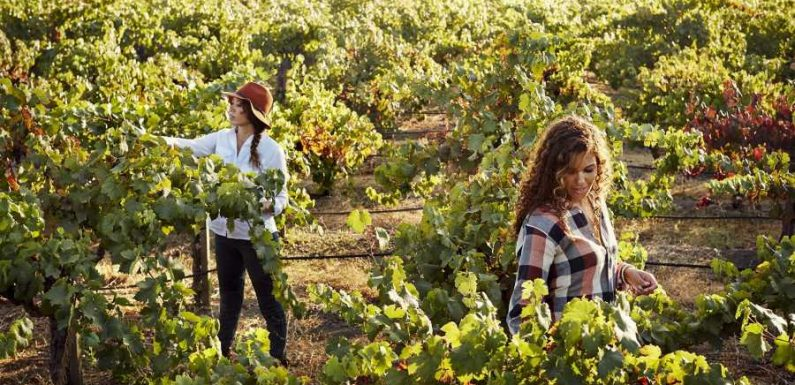 Meet the Sisters Behind One of the Wine Industrys Most Exciting Companies