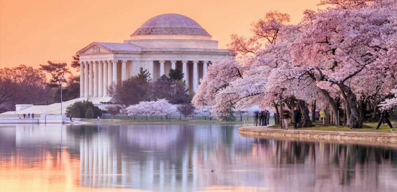 A 2021 Guide to Seeing Cherry Blossoms in Washington, D.C.