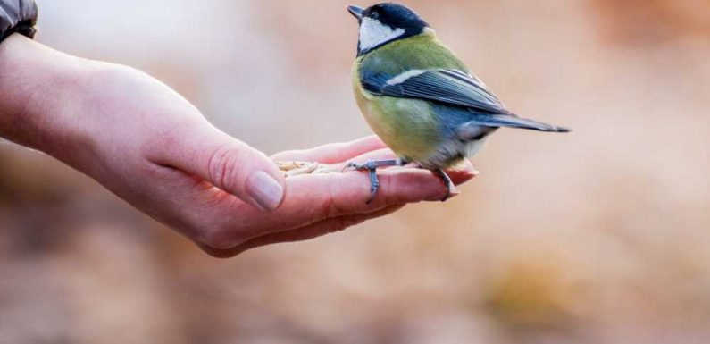 Science Says Being Surrounded by Birds Can Make You Happier