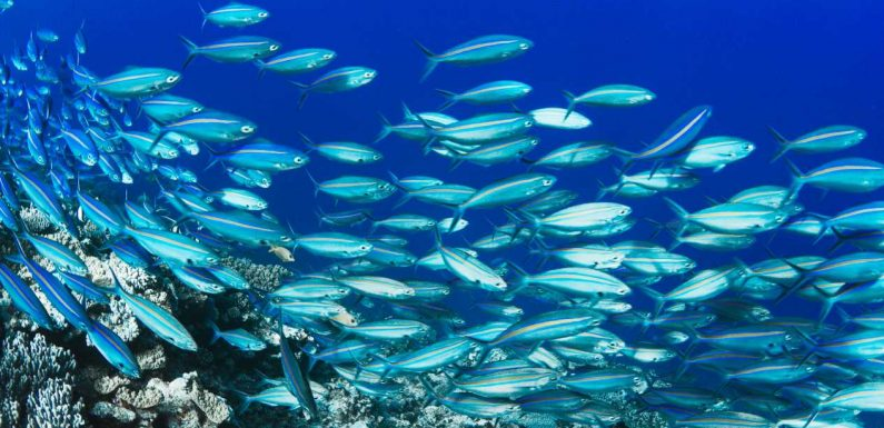A New Partnership Aims to Protect Our Fragile Oceans—Here's How Travelers Can Help