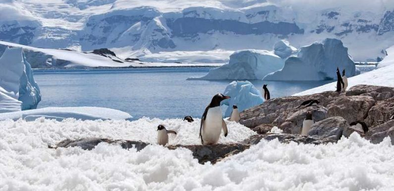 Get Married in Antarctica Next Valentine's Day With Penguins and Seals