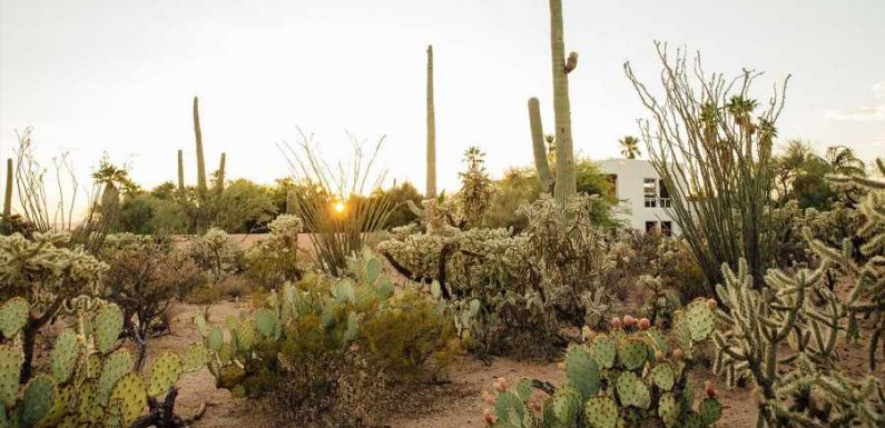 The Magic of the Desert Comes to Life at This Airbnb Tucked Away in a Saguaro Cactus Forest