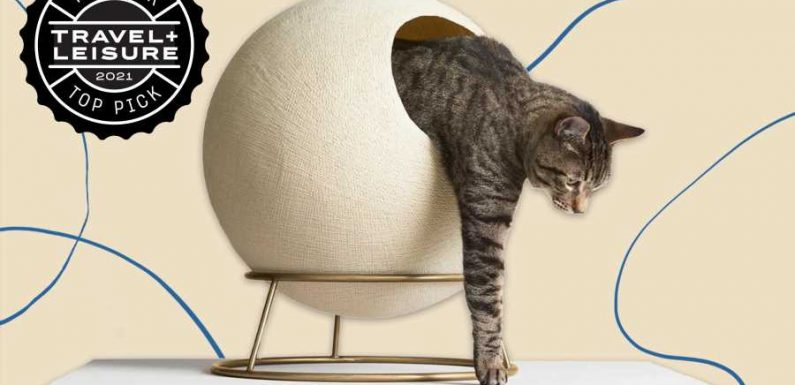 This Pet Brand Is Making Litter Boxes and Cat Scratchers Into Actual Pieces of Decor