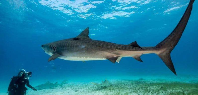 7 Amazing Shark Experiences Around the World