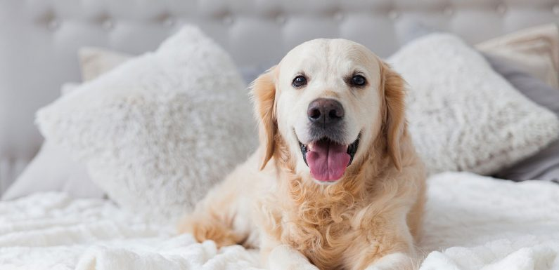This Hotel Brand Is Looking for a 'Camera-ready Pup' To Be Its New Ambassador