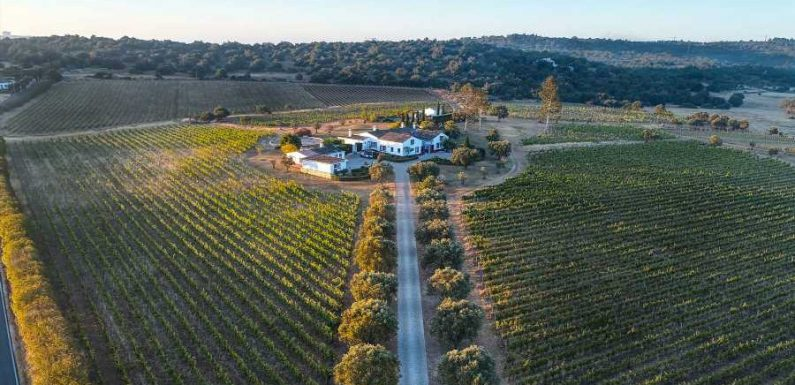 Among the Beaches, Portugal's Wine Region Shines