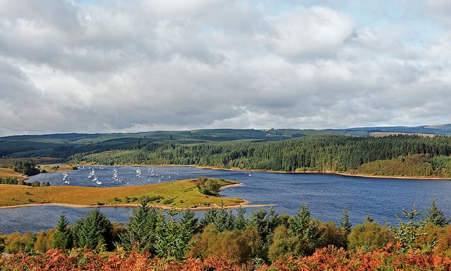 The joys of foraging in Northumberland's Kielder Water and Forest Park