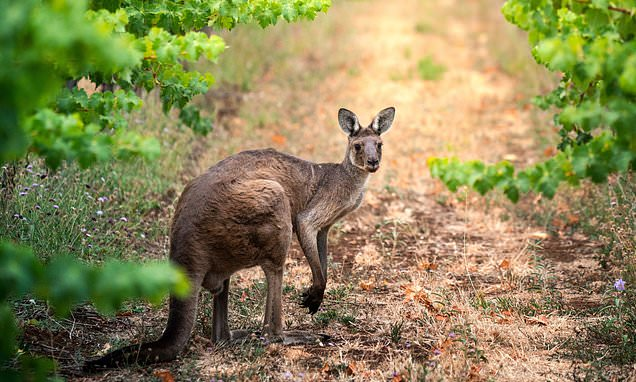 Why South Australia should be top of your holiday wish list