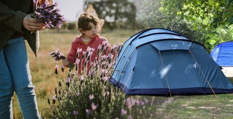 Camping warning: Flower-picking rule could see Britons face 'big trouble'