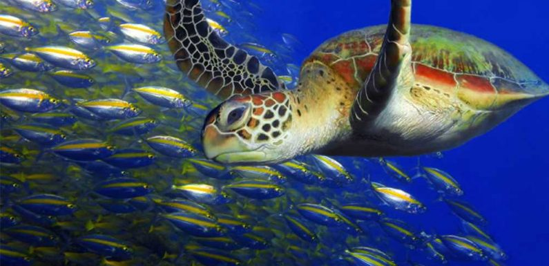 Resorts in Aruba and Nevis focus on the sea-turtle experience
