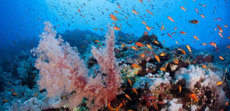 The 5 Best Reefs to Explore Around the Globe, According to Professional Divers