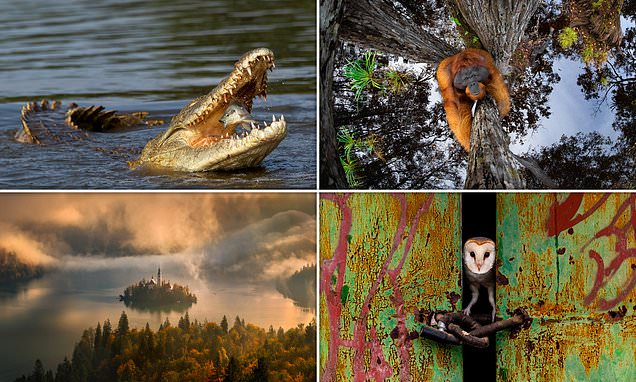 The incredible winning photos in a nature photography contest