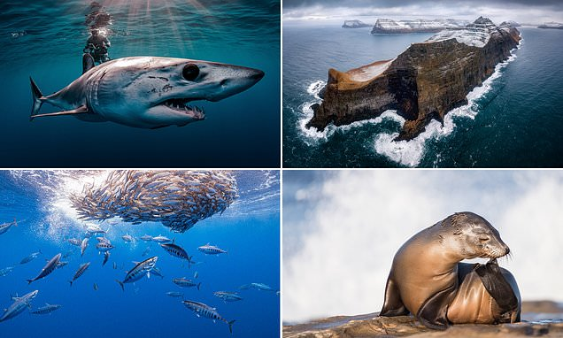 The winning images in the UN World Oceans Day photo contest revealed