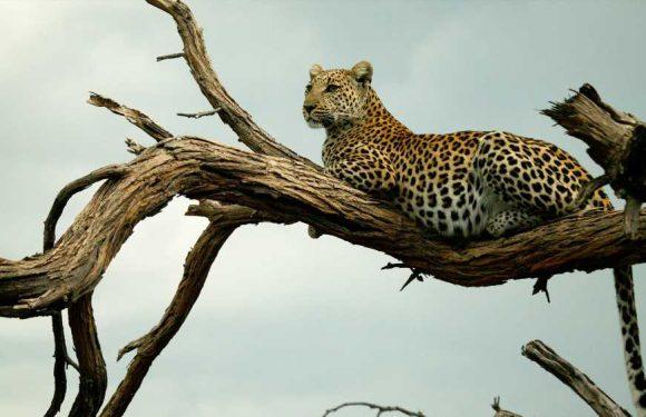 Great Plains' new Botswana tours transform guests into explorers