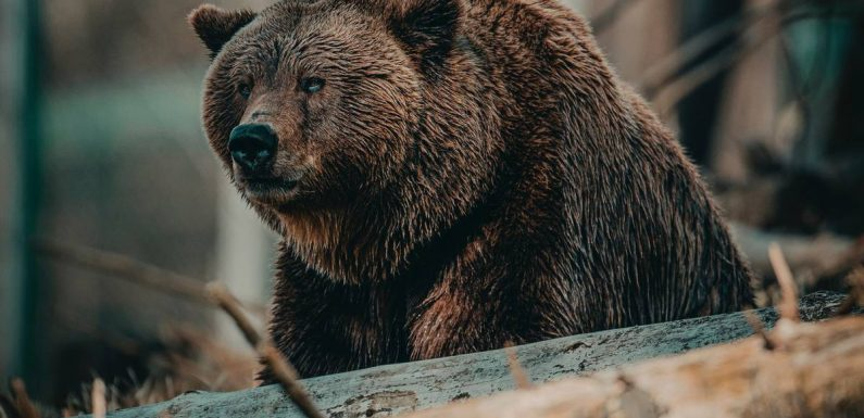 Grizzly bear kills cyclist camping in Montana town Ovando