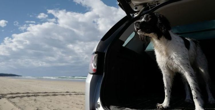 Holiday without your dog? No way! 6.3m pooches heading on UK breaks with owners this year