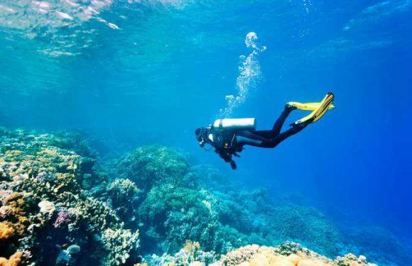 Montage Los Cabos launches PADI dive program