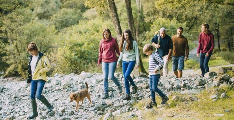 Most dog-friendly national parks in the UK: Where is the best park to walk dogs?