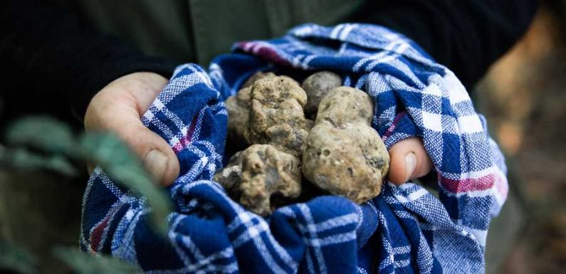 This Brand-new Hotel in Italy Is Home to the World's First Truffle Concierge