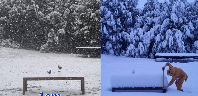 All the new snow at every ski field in New Zealand after bumper Sunday dump