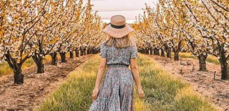 Cherry blossom festival coming to Victoria