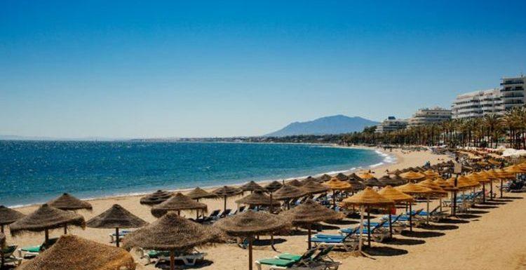 Spain jellyfish warning issued: Costa del Sol facing stinging fish 'all summer'