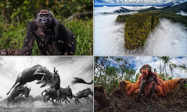 British photographer wins contest with stunning photo of a gorilla