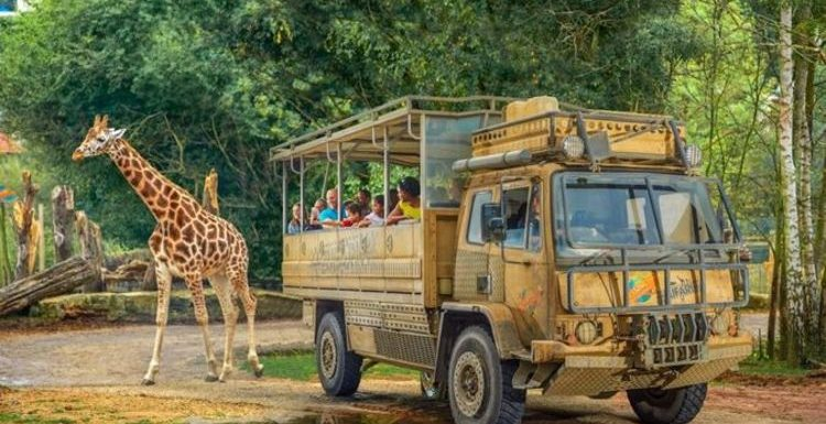 Chessington World of Adventures slash over 20 percent off tickets – how to get deal