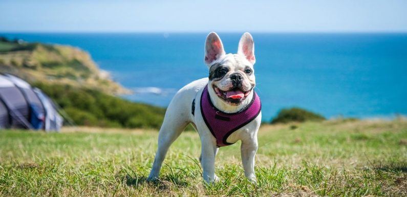 Handy guide to camping with your dog – from booking sites to packing checklist