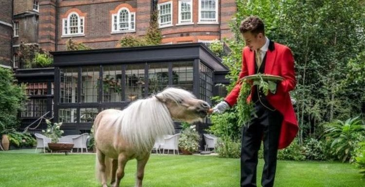 Have afternoon tea with Teddy the pony in London this Bank Holiday weekend