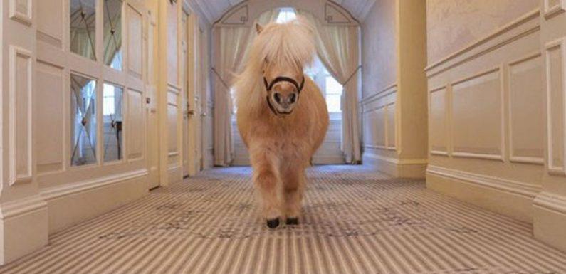 Luxury London hotel where you can enjoy afternoon tea alongside 'resident pony'