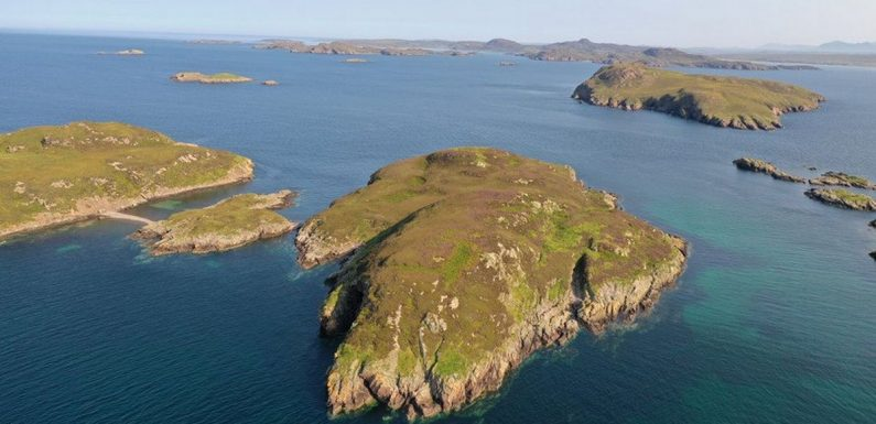 You can buy a private island in the UK for £50k with dolphins and whales nearby