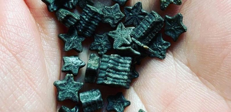 You can find 'fairy coin' fossils in the UK for a free day out with the kids