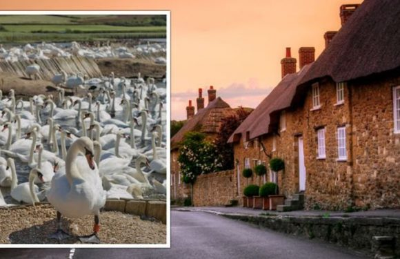 'Stunning' Dorset village with world-famous attractions named one of the best in the UK