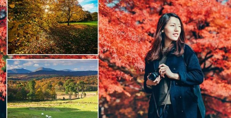 Eight best places to spot colourful autumnal leaves as 'leaf-peeping' season begins