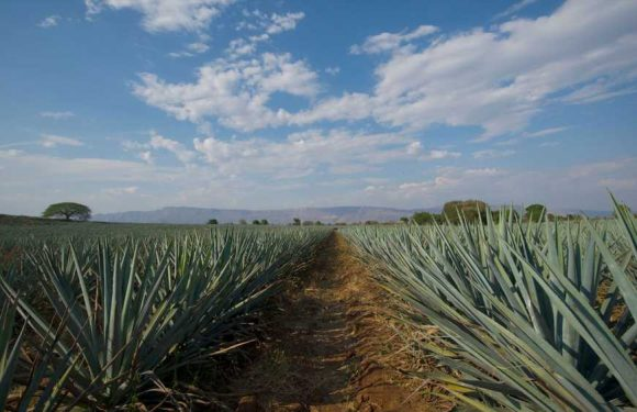 Tequila is named Latin America's first Smart Tourist Destination